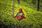 """Cezary Filew """"Tea for One"""" (2015-01-22 22:32:40) komentarzy: 11, ostatni: Już tylko zieloną"""