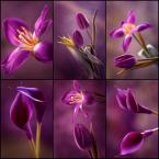 """mycatherina """"Bo kocham fiolety..."""" (2015-02-28 19:36:48) komentarzy: 11, ostatni: Finezja."""