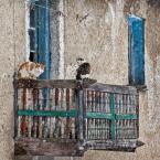 """macieknowak """"Koty balkonowe 1"""" (2015-04-05 16:24:23) komentarzy: 1, ostatni: Stylowy balkonik :)"""