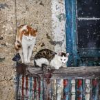 """macieknowak """"Koty balkonowe 2"""" (2015-04-05 16:24:57) komentarzy: 7, ostatni: Koty dodają uroku, ale te faktury i wzory na drewnie i ścianie wiodą prym :)"""