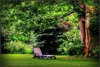 """Vills """"opowieści starego drzewa"""" (2015-04-07 18:18:43) komentarzy: 8, ostatni: za Mirasem ;)"""