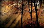 """Vills """"kolory jesieni"""" (2015-04-24 17:24:51) komentarzy: 15, ostatni: Światło i kolory super :)"""