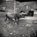 """wlamparski """"obserwator"""" (2015-05-15 09:06:14) komentarzy: 3, ostatni: szukać krowy na drugim końcu świata... kompletnie bez sensu :)"""