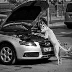"""macieknowak """"Mechanik"""" (2015-05-23 00:31:34) komentarzy: 15, ostatni: Świetne;-D dodam do ulubionych"""