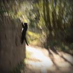 """slw """"Kot o imieniu Czajnik"""" (2015-06-04 11:55:33) komentarzy: 1, ostatni: :)"""