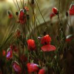 """Einsteiger """"Maki Maki"""" (2015-06-16 16:05:37) komentarzy: 2, ostatni: Podoba mi się ten ciepły """"chaos"""" łąkowy"""