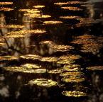 """asiasido """"Szuwary - nenufary 4"""" (2015-06-17 16:14:49) komentarzy: 7, ostatni: Pięknie"""