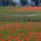 """tevye """""""" (2015-06-29 21:24:00) komentarzy: 1, ostatni: krwawi nasza ziemia polska katolicka jak pod  kasynem gdy wydasz całą kasę swą i musisz sprzedać dom"""