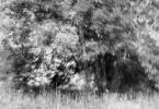 "monavida ""prawie jak linoryt ;)"" (2015-07-08 13:40:12) komentarzy: 3, ostatni: Za M esco..:)"