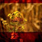 """PaparazziEvo """"motyl"""" (2015-07-27 07:02:34) komentarzy: 1, ostatni: prawie jak flaga Hiszpanii :)"""