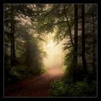 """matyldaW """"Z Rysianki"""" (2015-08-03 23:37:10) komentarzy: 23, ostatni: Majestatyczny i tajemniczy. Brakuje mi spacerów po lesie. Znakomita fotografia, kolejna którą chłonę."""