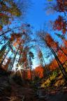 """JarekZ-68 """"... zakręcona jesień ;)"""" (2015-10-24 12:17:28) komentarzy: 3, ostatni: :)"""