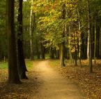 """zbyniu """"Jesienny spacer"""" (2015-10-24 14:12:27) komentarzy: 2, ostatni: tak. niestety dzis zrobilo sie juz ponuro..."""