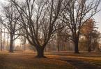 """Anka """"Kawałek parku"""" (2015-11-04 19:58:03) komentarzy: 6, ostatni: innym razem Arturze :)"""
