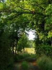 """Maciek Froński """"Droga do wsi"""" (2015-11-13 08:28:30) komentarzy: 0, ostatni:"""