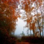 """Wołodytjowski """"Listopadowa mgła w rdzawej scenerii"""" (2015-11-15 00:23:25) komentarzy: 1, ostatni: ładne"""