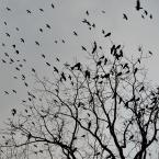 """maciek_szaj """""""" (2015-12-29 20:43:02) komentarzy: 5, ostatni: """"Rozdzióbią nas kruki, wrony"""""""