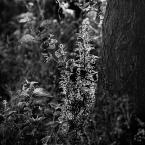 """rysiek57 """""""" (2016-01-19 22:30:50) komentarzy: 7, ostatni: Bardzo lubię takie patrzenie i światło. Tu odrobinę chaosu przez różnorodność zielska się wkradło."""