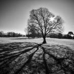 """Trollek """"Tree Star II"""" (2016-01-26 16:08:46) komentarzy: 13, ostatni: ładnie"""