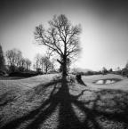 """Trollek """"Tree Star III"""" (2016-02-05 14:37:32) komentarzy: 13, ostatni: o też bardzo ładnie"""