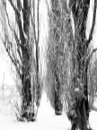 """BJZ """"Zimowe drzewa...."""" (2016-03-01 22:19:45) komentarzy: 0, ostatni:"""