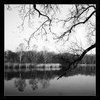 """Kamil Mysiak """""""" (2016-03-11 11:47:02) komentarzy: 4, ostatni: gałęzie u góry świetnie rozdrapują niebo :)"""
