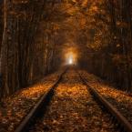 """pawello91 """"Jesienny tunel"""" (2016-03-13 20:53:23) komentarzy: 19, ostatni: Pięknie"""