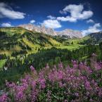 "Meller ""Alpejskie Lato"" (2016-03-23 23:31:54) komentarzy: 9, ostatni: super"