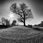 "Trollek ""Tree Star IV"" (2016-04-24 21:59:48) komentarzy: 4, ostatni: :)"