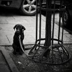 "DELF ""psie smutki"" (2016-05-13 20:42:00) komentarzy: 3, ostatni: Ale bida sobie siedzi :)"