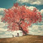 """adamix69 """"drzewo ..."""" (2016-06-16 20:20:28) komentarzy: 10, ostatni: bdb"""