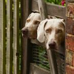 """asiasido """"Psie klony 1"""" (2016-06-21 23:07:10) komentarzy: 2, ostatni: Miłe pyski :)"""