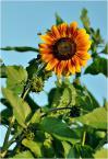 """donasz """"Słońce na Ziemi"""" (2016-07-31 08:10:26) komentarzy: 1, ostatni: wspaniałe, takie surowe :)"""