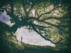 """Trollek """"Tree of Life"""" (2016-08-19 16:34:09) komentarzy: 18, ostatni: dziékujé za wyróznienie . pozdrawiam"""