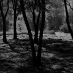 """BornDead """""""" (2016-08-27 15:05:42) komentarzy: 1, ostatni: bardzo ciekawe ! fajnie się prezentują te ciemne skośne pnie drzew w swoim własnym półmroku :)"""