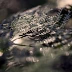 """wakawaka """"grzybobranie"""" (2016-08-27 23:55:30) komentarzy: 1, ostatni: ładnie podane :)"""