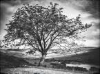 """Trollek """"Tree of Life III"""" (2016-09-02 17:44:17) komentarzy: 4, ostatni: bardzo :)"""