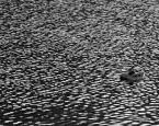"""Yani """"... www.kaczka smoleńska.pl"""" (2016-09-15 20:30:49) komentarzy: 5, ostatni: Ciekawa faktura wody"""