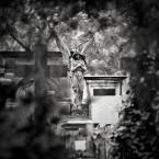 """DELF """"posąg anioła"""" (2016-10-04 19:20:05) komentarzy: 9, ostatni: kadr, historia"""