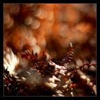 """matyldaW """"przerywnik jesienny"""" (2016-10-05 01:40:18) komentarzy: 10, ostatni: Bardzo ładnie."""