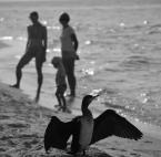 """Tami66 """"Na plaży"""" (2016-10-05 16:59:19) komentarzy: 2, ostatni: więcej dołu... poza tym bdb :)"""