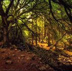 """Trollek """"The Forest"""" (2016-10-17 13:45:01) komentarzy: 1, ostatni: przepiękne konarzysko gałęziowe :)"""