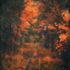 """daro13 """"Idzie jesień"""" (2016-10-18 16:14:15) komentarzy: 2, ostatni: świetne, płomienne, poruszające z tą sylwetką w głębi :)"""