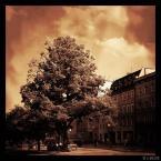 """A.Mason """"Drzewo przy Długiej"""" komentarzy: 1 (2016-11-09 19:01:21)"""