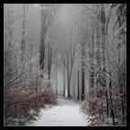 """matyldaW """"W płatkach śniegu, z wiatrem za rekę"""" (2016-11-21 03:25:47) komentarzy: 23, ostatni: pięknie"""