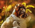 """Cezary Filew """"Szpieg z krainy lemurów"""" (2016-12-24 13:38:23) komentarzy: 3, ostatni: A to piękne, powodzenia w Nowym Roku :)"""