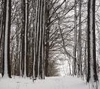 """Anka """"zima"""" komentarzy: 1 (2017-01-15 18:21:08)"""