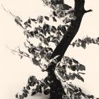 """Rafał Król """"Szczyrk, Biały Krzyż"""" (2017-02-20 12:18:21) komentarzy: 2, ostatni: bdb, z japońskim klimatem :)"""