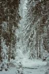 """Leśne Licho """"Puszcza w zimowej szacie"""" komentarzy: 1 (2017-03-03 12:32:15)"""