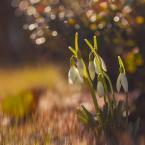 """dudisan """"idzie wiosna"""" (2017-03-03 23:03:49) komentarzy: 8, ostatni: ładnie"""
